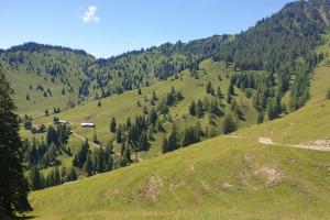 Abfahrt zum Almgebiet - Wegpunkt 12 entlang der Tour