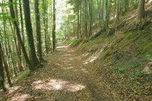 Abfahrt durch den Wald - Wegpunkt 14 entlang der Tour