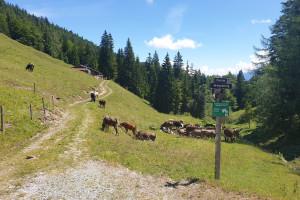 Oberaudorfer Alm - Wegpunkt 13 entlang der Tour