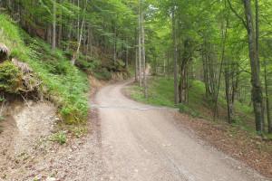 Auffahrt Brünnstein - Wegpunkt 5 entlang der Tour
