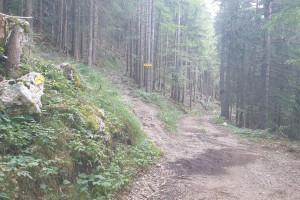 Abzweigung im Wald - Wegpunkt 12 entlang der Tour