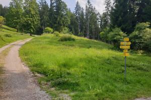 Abzweigung an der Waldlichtung - Wegpunkt 2 entlang der Tour