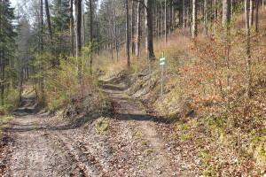 Wanderpfad zur Ruine - Wegpunkt 2 entlang der Tour