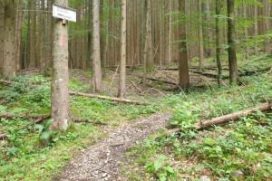 Start Tragestrecke - Wegpunkt 4 entlang der Tour