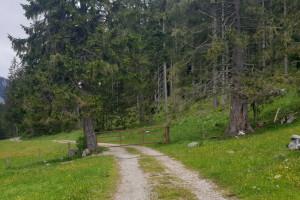 Weidegatter im Oberarzmoos - Wegpunkt 7 entlang der Tour