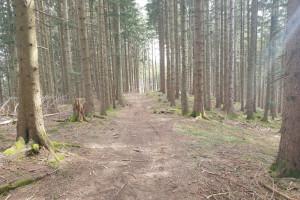 Waldweg Richtung Sternplatte - Wegpunkt 4 entlang der Tour