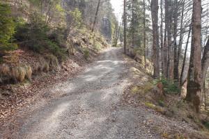 Anstieg Forststraße zur Ramserer Alm - Wegpunkt 7 entlang der Tour