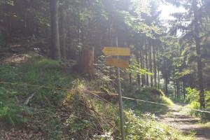 Abzweigung im Wald - Wegpunkt 1 entlang der Tour
