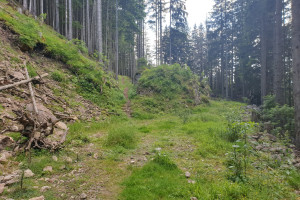 Start Wanderpfad zum Großen Riesenkopf - Wegpunkt 5 entlang der Tour
