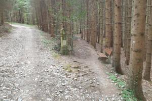 Abzweigung im Wald - Wegpunkt 13 entlang der Tour