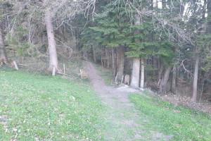 Einfahrt in den Wald - Wegpunkt 11 entlang der Tour