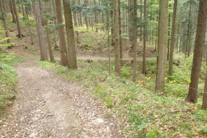 Abfahrtstrail durch den Wald - Wegpunkt 15 entlang der Tour